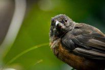 Baby Bird Kopenhagen Zoo
