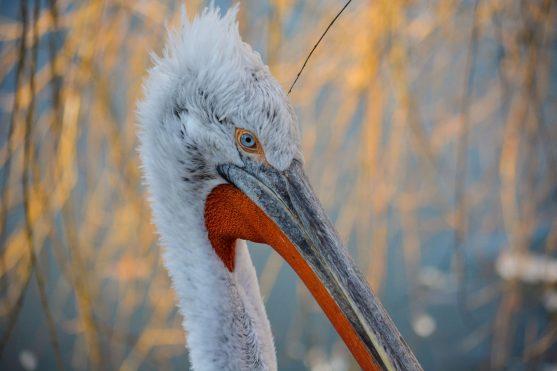 Bird Kopenhagen Zoo