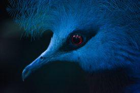 Blue Bird up close Kopenhagen Zoo