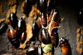 Cockroaches Kopenhagen Zoo