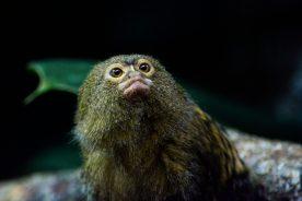 Little Monkey Kopenhagen Zoo