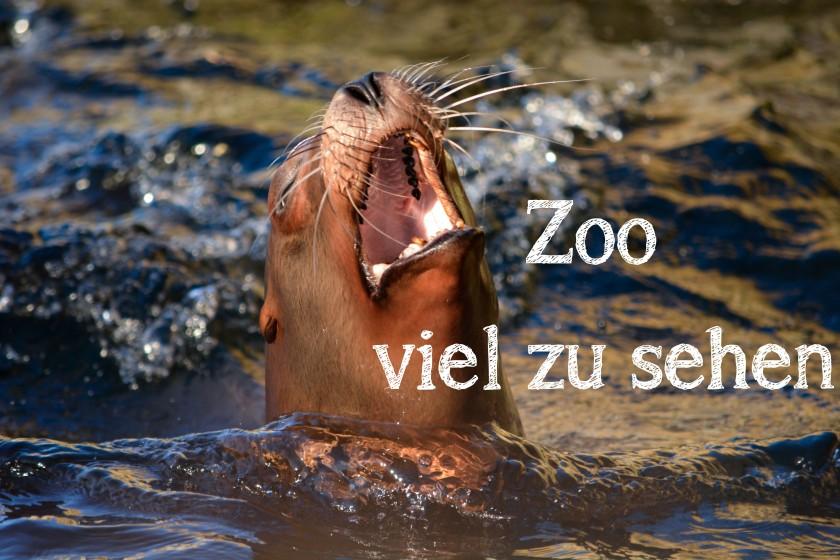 Sea Lion Kopenhagen Zoo