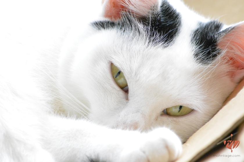 DIY-Amigurumi-Katzenspielzeug-Motte-Katze-Mohntage