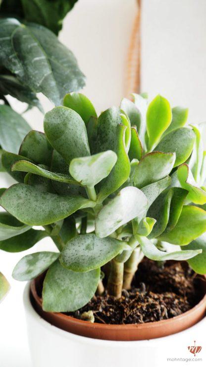 welche pflanzen sind ungiftig f r katzen die sch nsten ungiftigen zimmerpflanzen f r. Black Bedroom Furniture Sets. Home Design Ideas