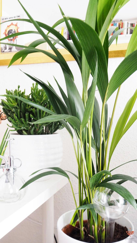 giftige zimmerpflanzen katzen bilder kennt jemand diese pflanze und ist sie f r katzen giftig. Black Bedroom Furniture Sets. Home Design Ideas