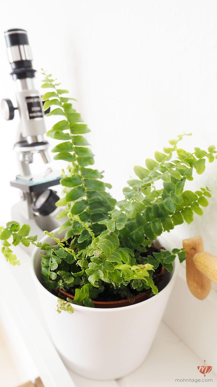Ungiftige Pflanzen Für Hunde welche pflanzen sind ungiftig für katzen die schönsten ungiftigen zimmerpflanzen für