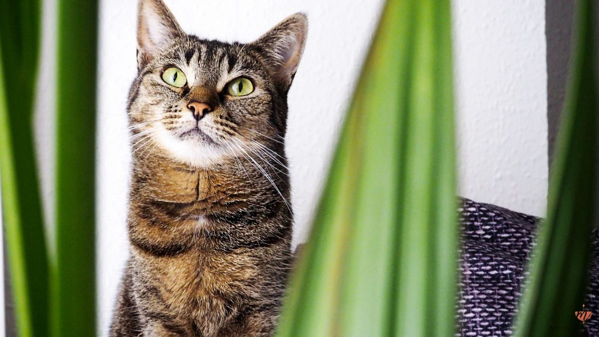 Welche Pflanzen sind ungiftig für Katzen? | Die schönsten ungiftigen Zimmerpflanzen für Samtpfoten